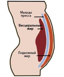abdominal-fat_.jpg